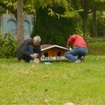 kestel kedi evleri