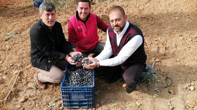 Marmarabirlik Zeytin Üreticisini memnun etmedi